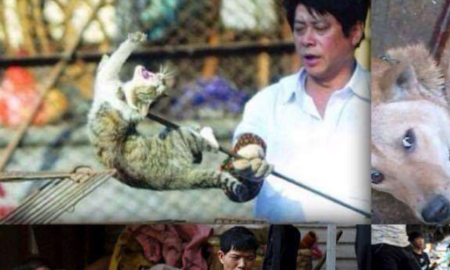 Petition: Against the atrocities of the Yulin festival