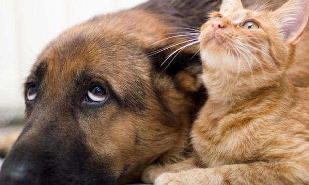 Pétition : Pour une interdiction de l'expérimentation animale