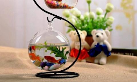 Non aux poissons dans des espaces trop petits dans les magasins animaliers