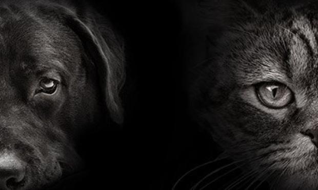 Pétition : Création d'une brigade française contre la violence animale