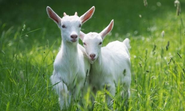 Cesser la maltraitance des animaux à Marjane