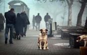 Pétition : STOP à l'extermination de tous les chiens errants de Krasnoyarsk !