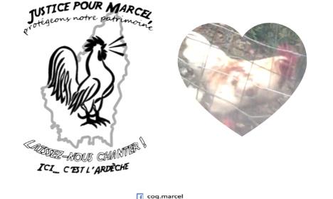 Pétition : Justice pour le coq Marcel !