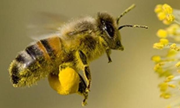 virer l'abeille
