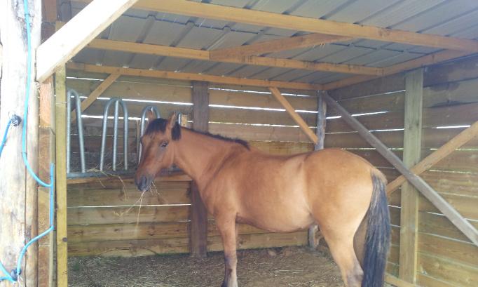 Destruction des abris pour chevaux sur la Pension sous décision de justice