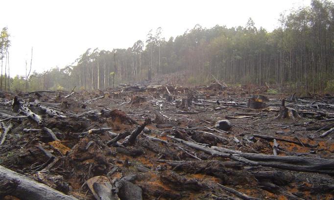 Pétition contre la déforestation