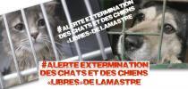 Pétition : Non à l'extermination des chats et chiens libres de Lamastre (07)
