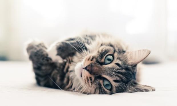 Halte à la maltraitance volontaire et actes de barbarie envers les chats errants