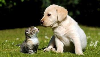 P�tition : Une loi reconnaissants les animaux de compagnie comme des �tres vivants � prot�ger et non plus comme des meubles.