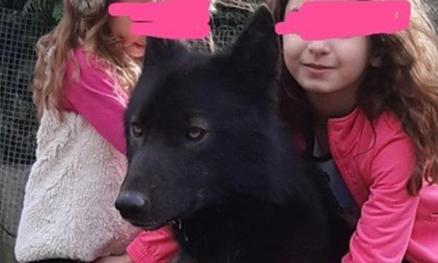 Rendez moi mon chien qui n'est pas un loup hybride