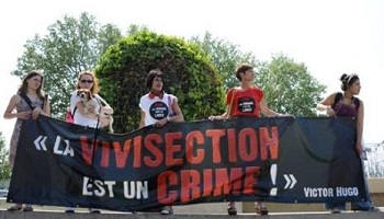 Pétition : Stop à la vivisection !