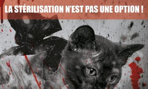 Pétition : Pour la stérilisation obligatoire des animaux de compagnie