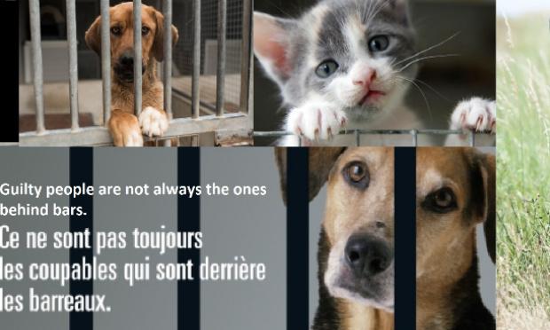 Sanction sévère  pour l'abandon et maltraitance d'animaux