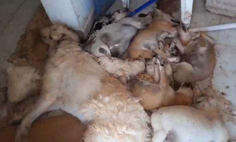 Pétition : Plus de 20 chiens sauvagement tués dans un refuge. Pour que l'article 317 soit sérieusement appliqué. Punir toute personne exerçant un traitements cruel, dégradant ou inhumain sur les animaux.
