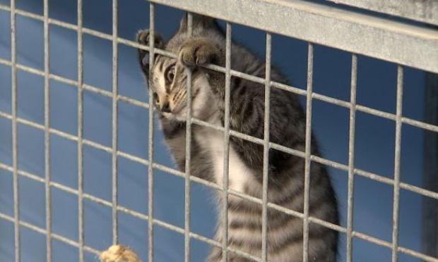 """Pour la suppression des catégories """"élevage occasionnel"""" et """"élevage amateur"""" de chats en Belgique (modification de l'arrêté royal du 27 avril 2007)"""