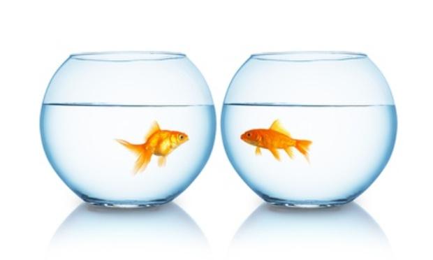 GAMM VERT : La place d'un poisson n'est pas dans un bocal (ni dans un verre d'eau !)