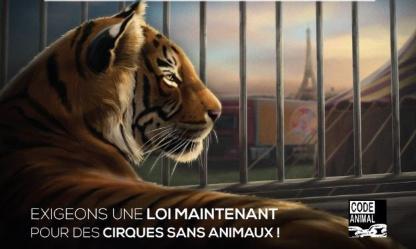 Pétition : Aix-en-Provence contre les animaux sauvages dans les cirques