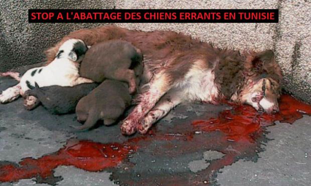 Stop à l'abattage des chiens errants en Tunisie !