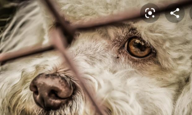 Pétition contre les animaux maltraités
