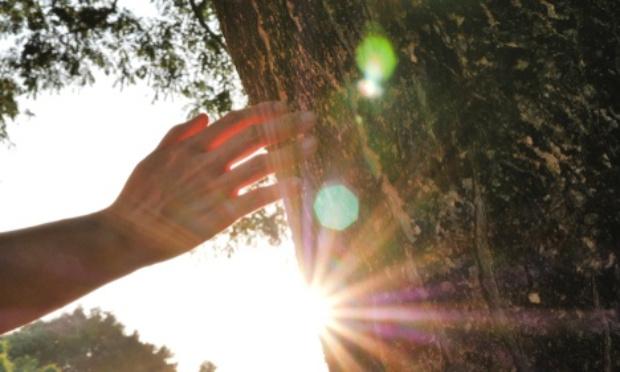 Pétition : Plus d'arbres et moins de pelouses