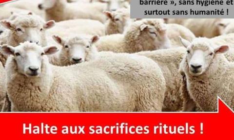 Pétition : STOP au massacre des moutons