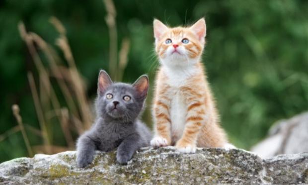 Pétition : Sauvons les chatons de Vacquié
