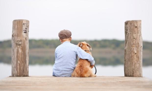 Durcir la loi pour la protection animale