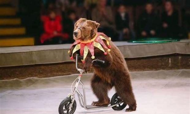 STOP aux animaux dans les cirques !