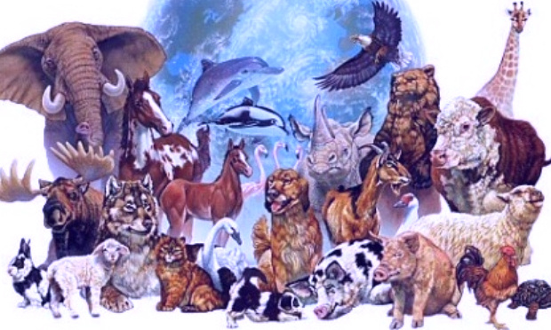 Non au commerce des espèces sauvages/The spotlight is on the Wildlife Trade