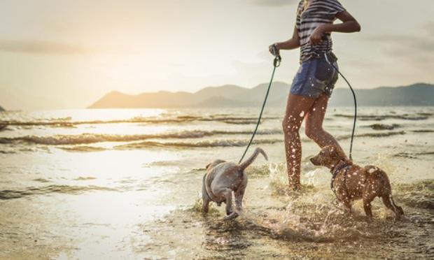 Pour avoir une plage pour chien