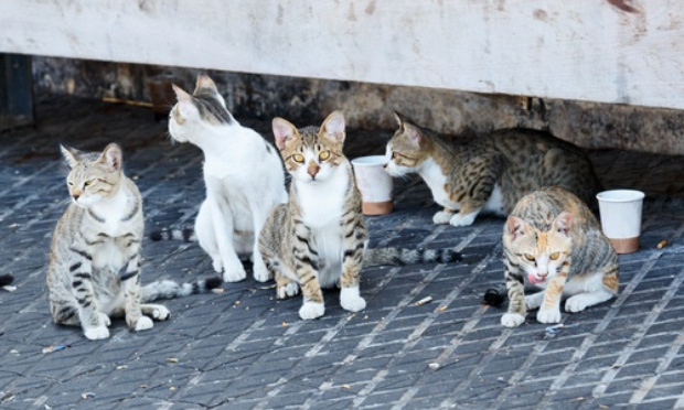 Retrouver nos chats