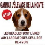 Pétition : STOP au massacre des Beagles et souris de Gannat