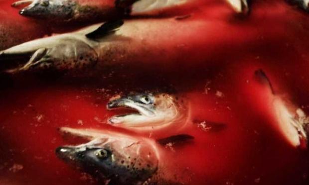 Non à la construction d'une ferme-usine de saumons dans le Boulonnais
