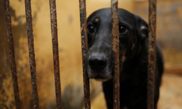 Pourquoi tant de souffrance animale ?