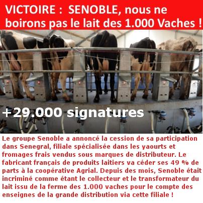 VICTOIRE :  SENOBLE, nous ne boirons pas le lait des 1.000 Vaches !
