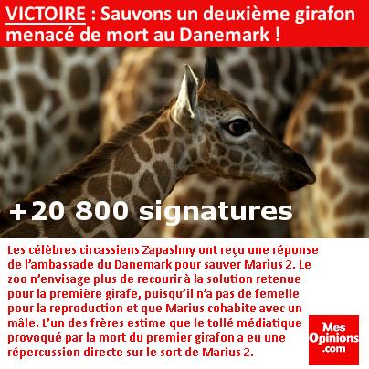 VICTOIRE : Sauvons un deuxième girafon menacé de mort au Danemark !